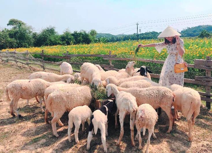trang trại hữu cơ đồng soi
