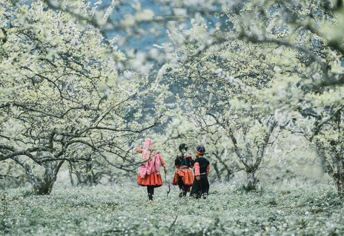 Thung lũng mận Nà Ka - thiên đường giữa cao nguyên Mộc Châu